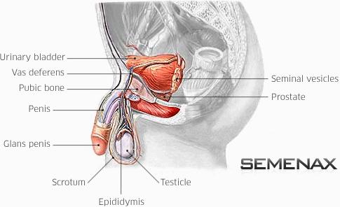 semenax-works