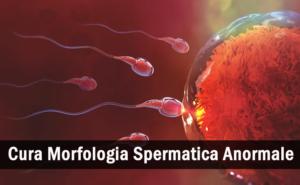 Tutto ciò che devi sapere sulla morfologia spermatica anormale e sul suo trattamento